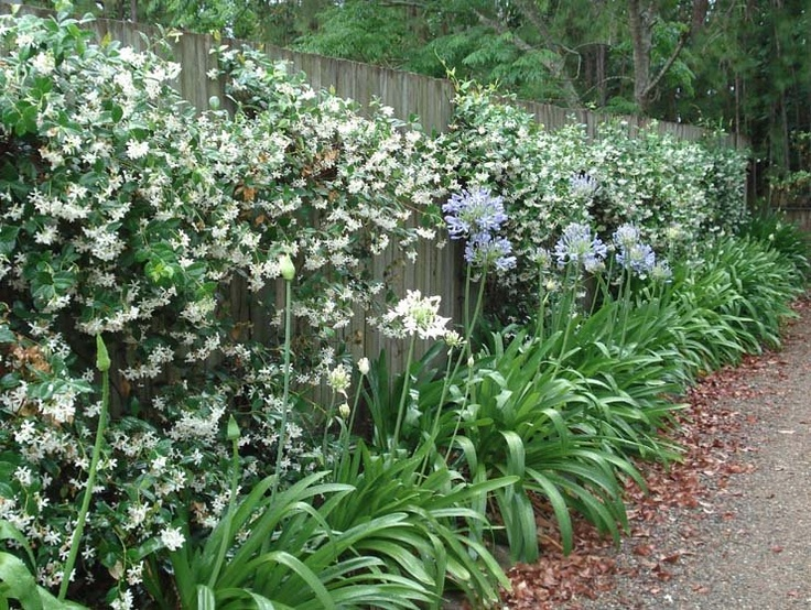 native woody plant seed collection guide for british columbia