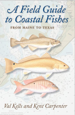 a field guide to fishes of chesapeake bay