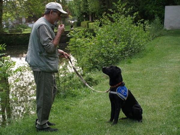 guide de chien d aveugle